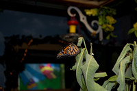 Alexis at Butterfly Sanctuary_July 27, 2018_0020