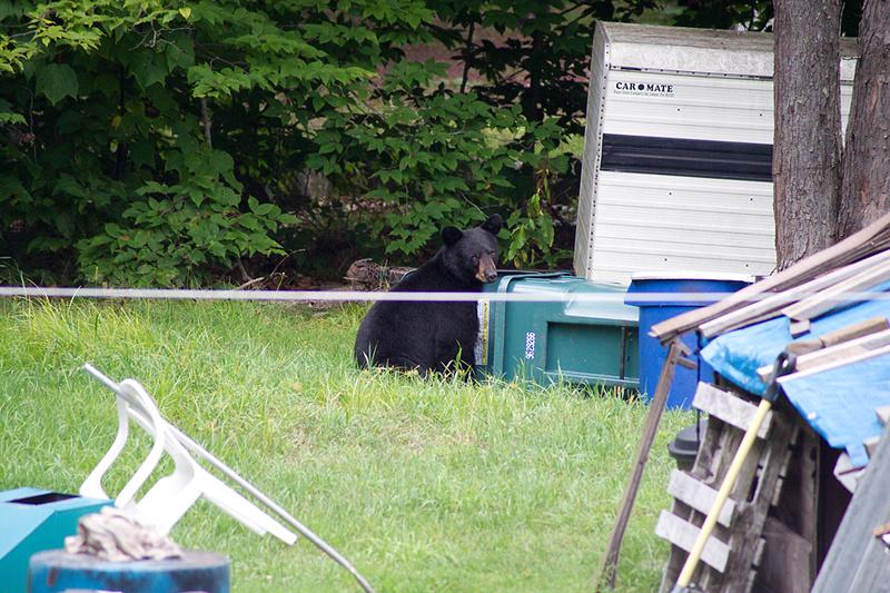 Bear_Aug242014_8493