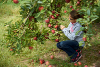 Apple Picking and Picnic_Sep272015_3125